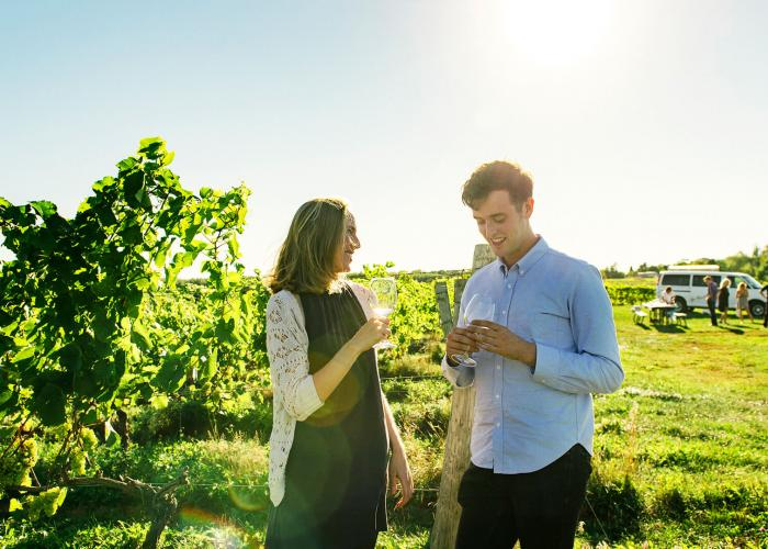 A smiling couple candidly samples white wine in a vineyard at a Nova Scotia winery while a group picnics in the foreground.